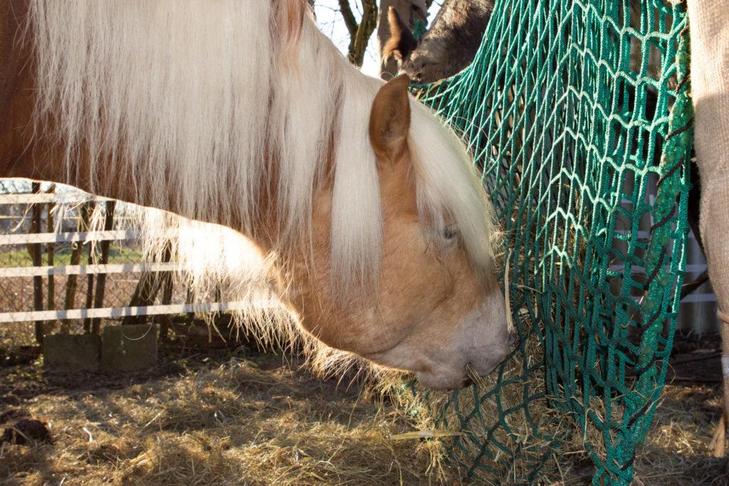 Heunetz als Slowfeeder Netz, Pferdefütterung