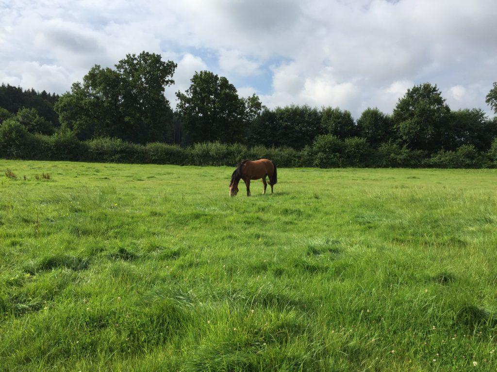 natürliche Pferdefütterung durch Slowfeedersysteme