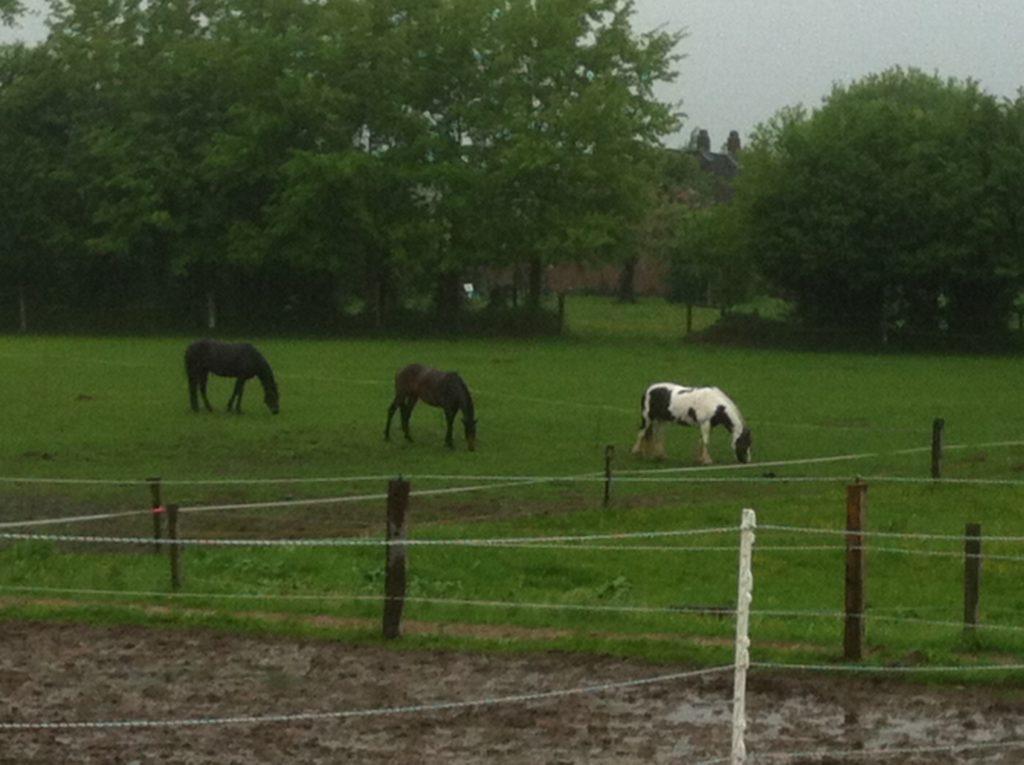 Pferdefütterung