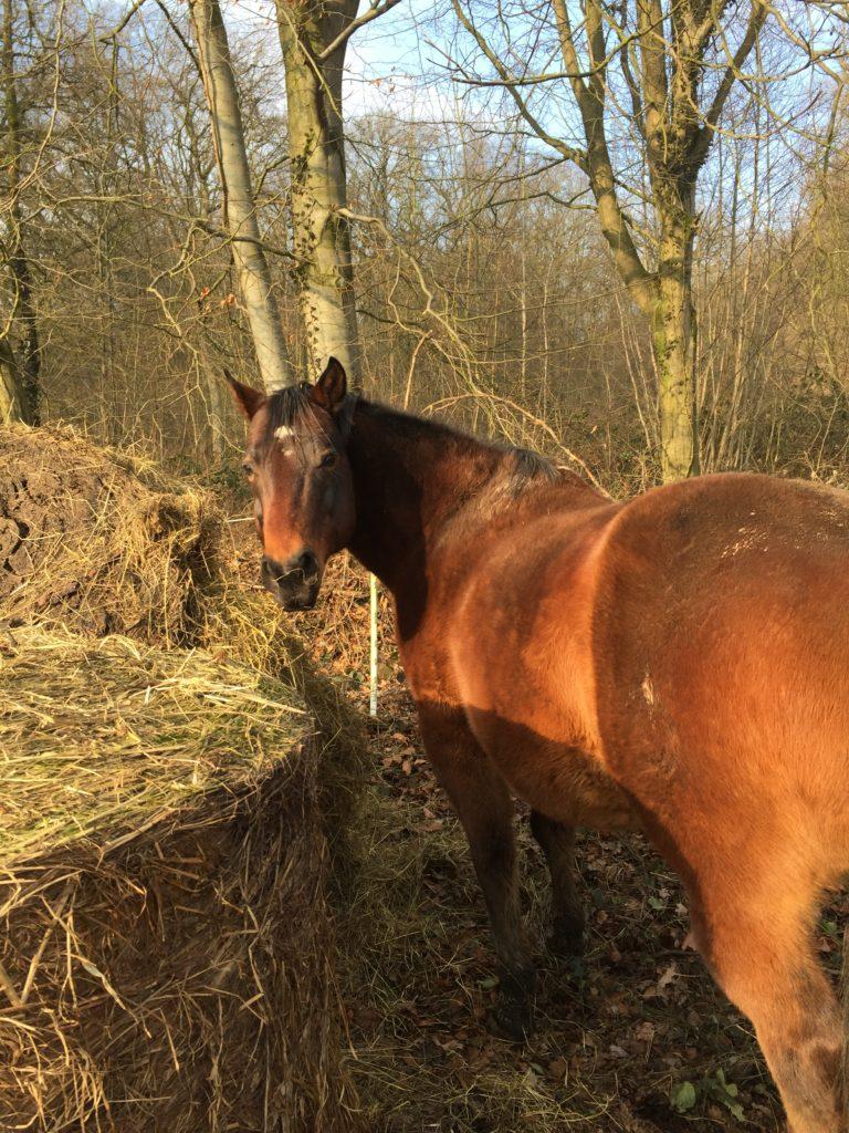 Slowfood für Pferde Heunetze