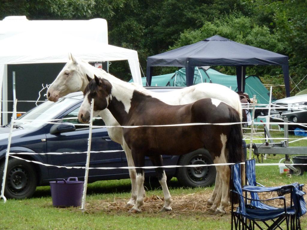 Slowfood für Pferde - Heunetze