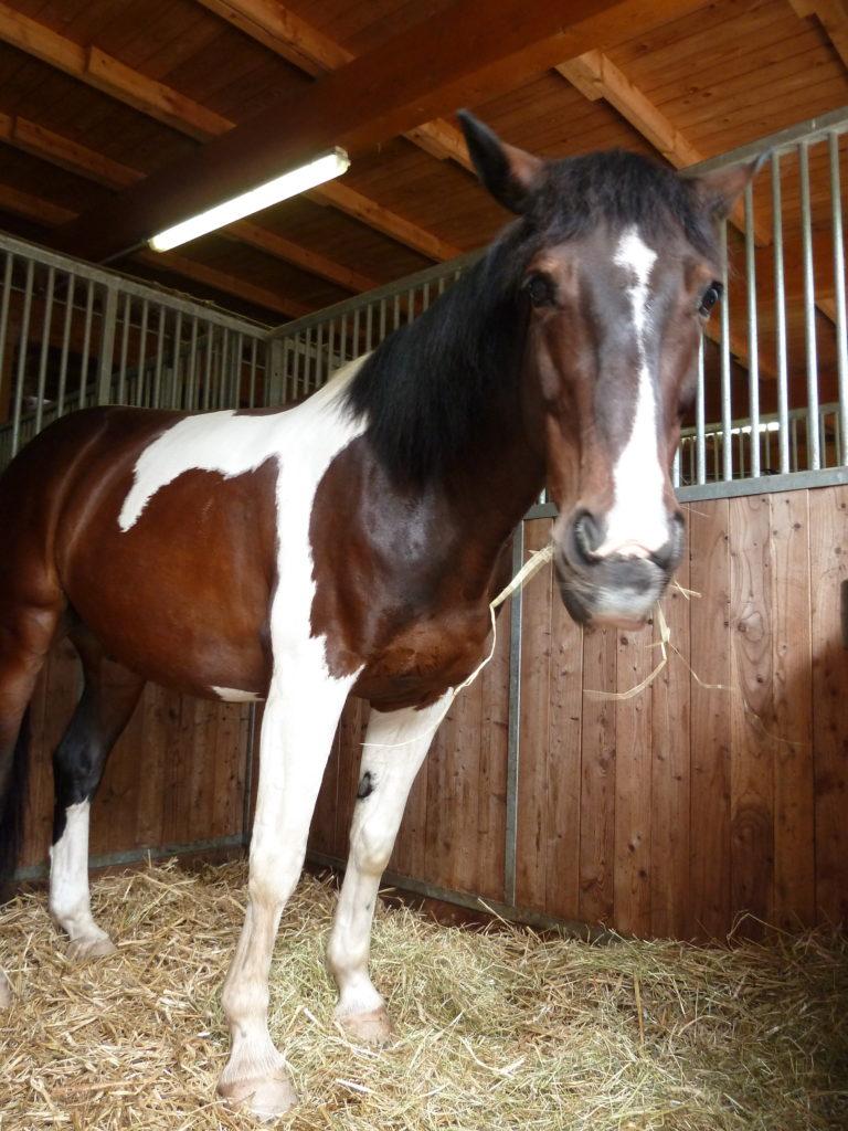 natürliche Pferdefütterung bei Boxenpferden