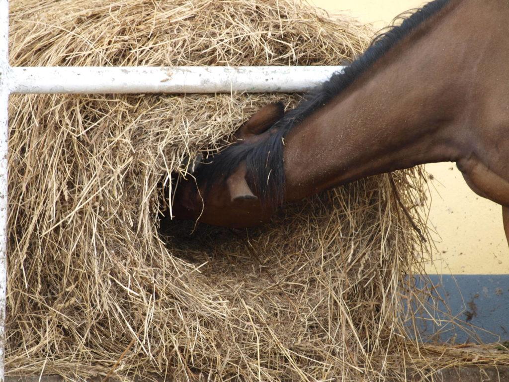 Pferdefütterung mit Heunetzen