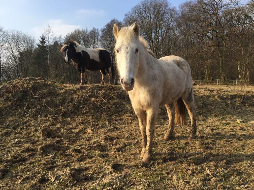 Pferde eindecken