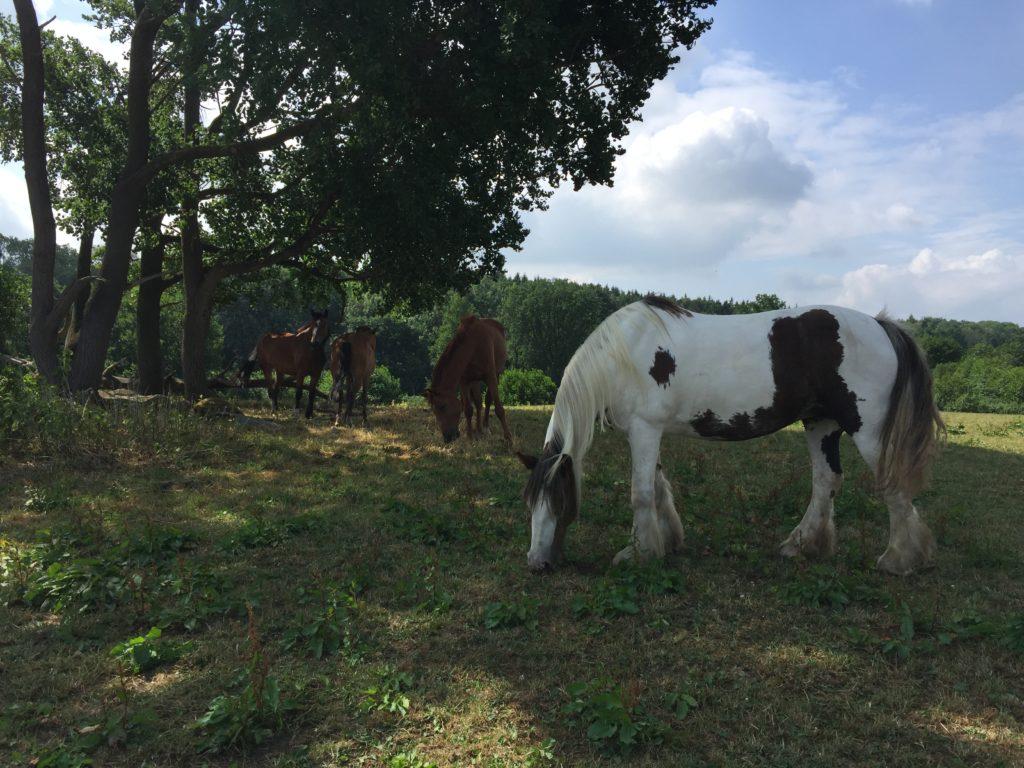 pferdepflege.net - alles rund um die Pferdepflege
