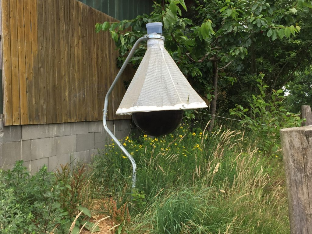 insektenfeindliche Pferdekoppel - Weide ohne Bremsen, Fliegen, Mücken