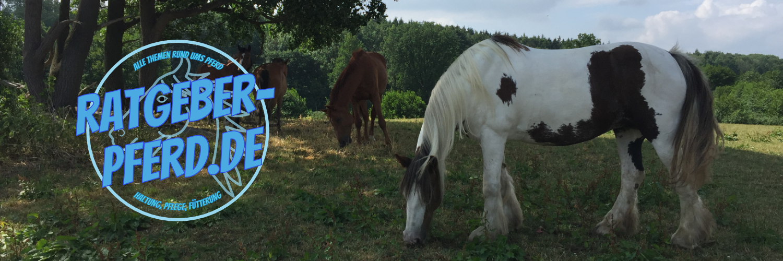 Ratgeber Pferd